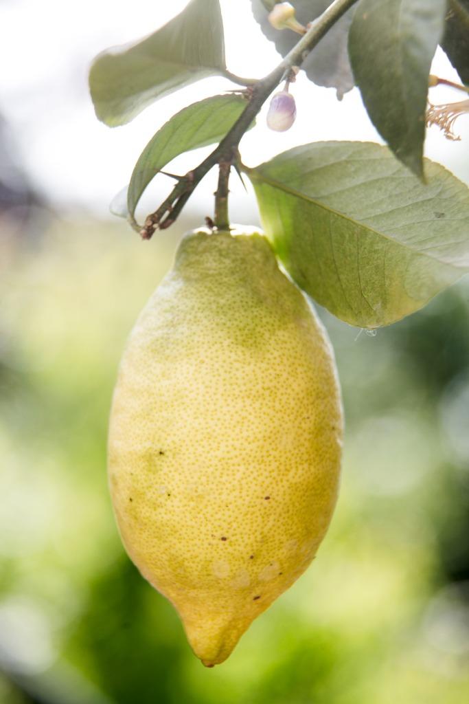 Moden citron.
