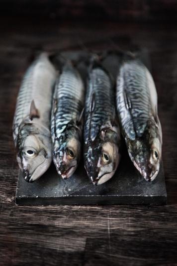 Friske-makreller