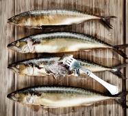 varmrøgede-makreller
