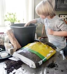 Få de tidligste kartofler - læg dem i en spand