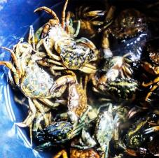 Dagens-fangst_ungernes-have_strandkrabbesuppe